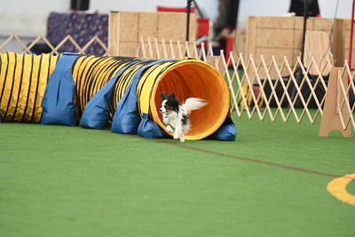 Dauphin DTC AKC Agility Trial October 17-18
