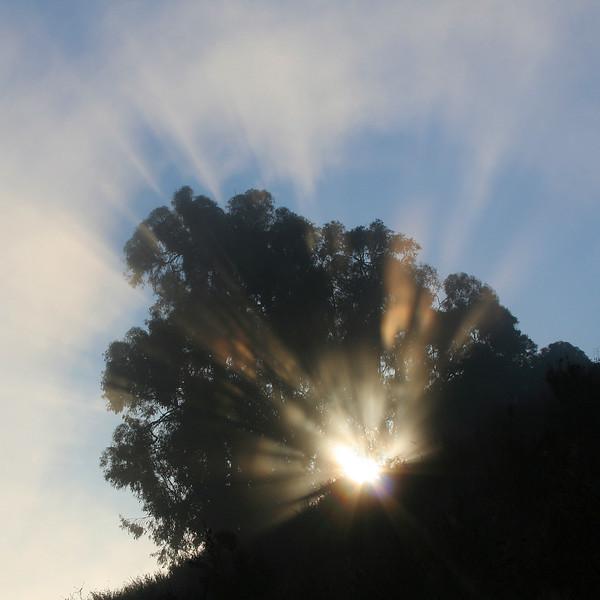 0465 Sun Rays thru Tree.jpg