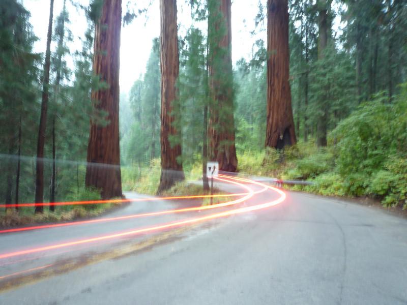 car in sequois.JPG