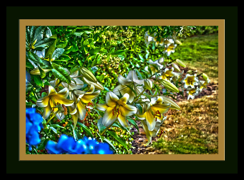 YellowLillies_Abstract_664A6219.jpg