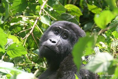 Uganda - 2007