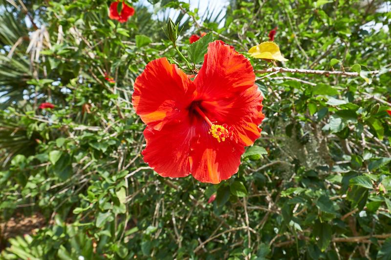 Useppa-Botanical-Walk-090.jpg