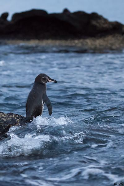 Ecuador, Galápagos, Bartolomé