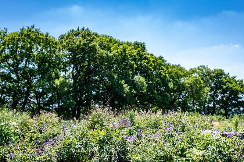 Sussex Prairie Gardens Z6-3754.jpg