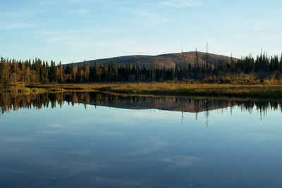 Water reflections and moose on Chena Hot Springs Road | 2014-09-19