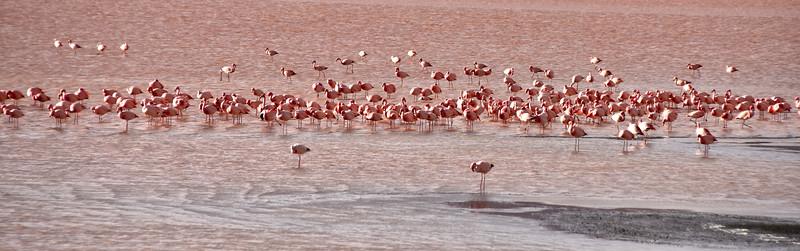 BOL_2554-Red Lake Flamingos.jpg