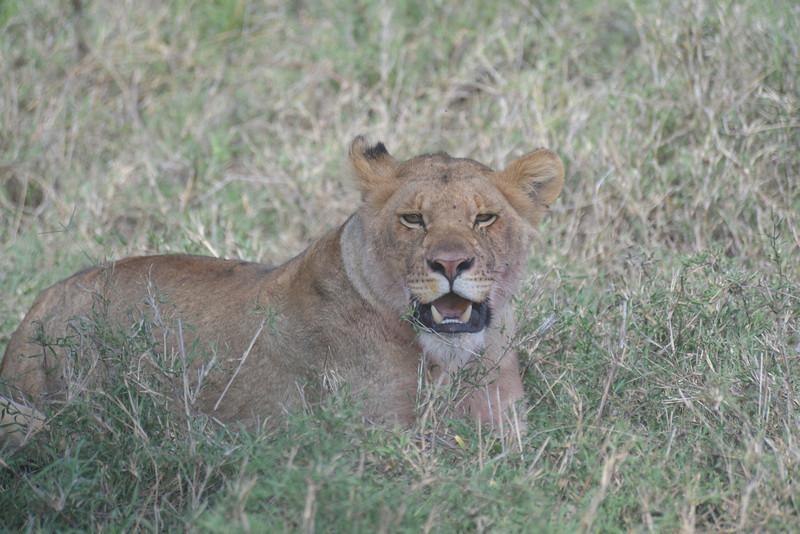 East Africa Safari 322.jpg