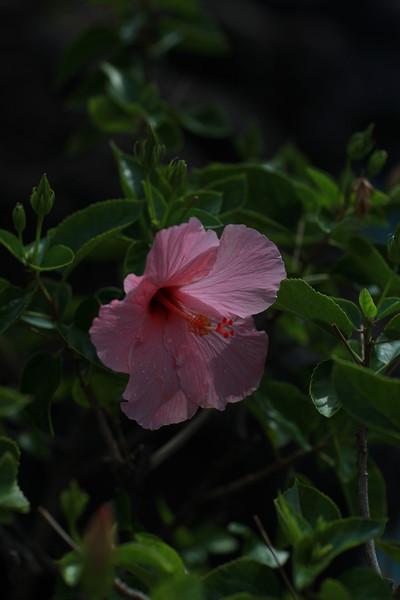 Kauai_D4_AM 173.jpg