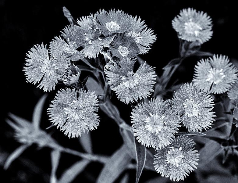 flower group-.jpg