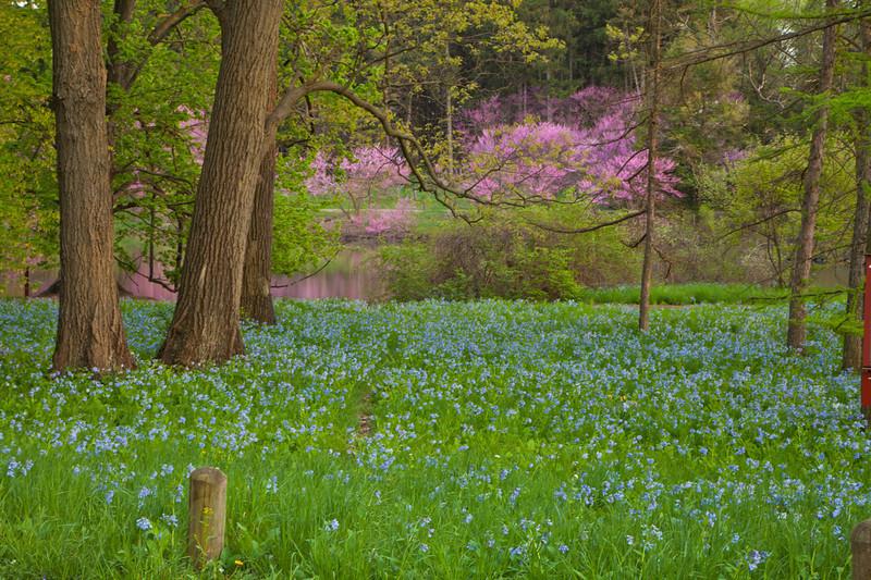 Spring13-0272.jpg