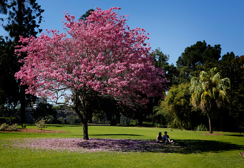 Brisbane Botanical Gardens #1.jpg