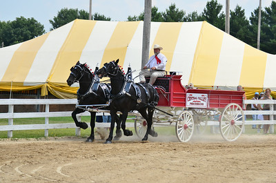 Percheron mens team