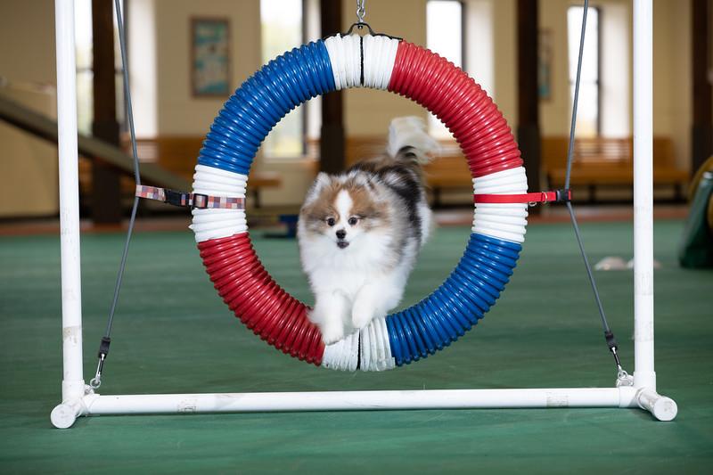 SPCA_Agility-14.jpg