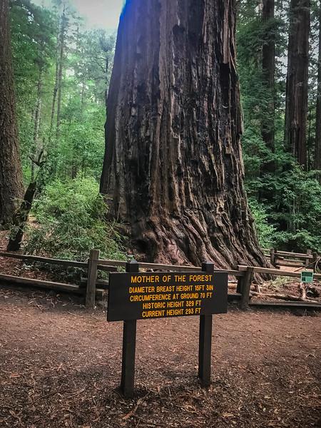 Redwood-100.jpg