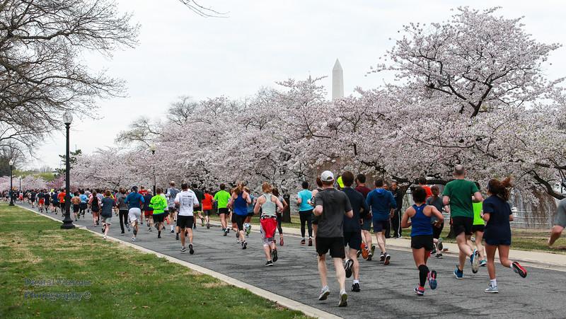 DC Cherry Blossoms 2019 009.jpg
