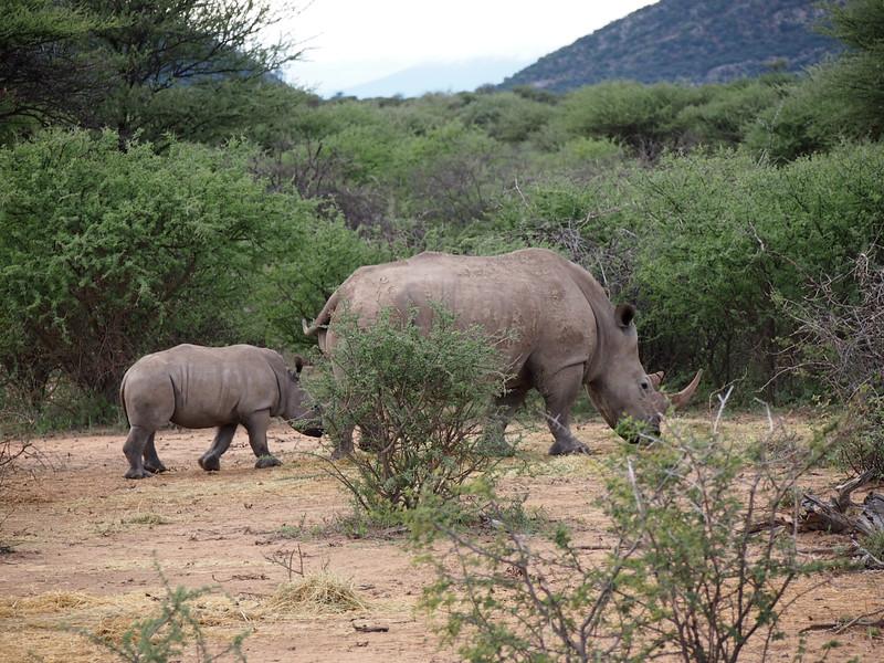 P3281168-rhino-and-baby-rhino.JPG