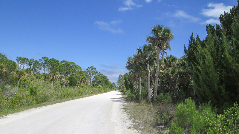 Dirt road between palms and pines