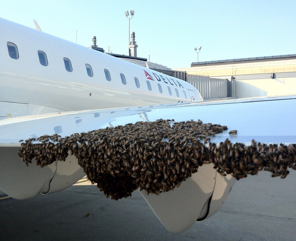 . <p>24. BEES <p>Talk about versatility: They can shut down a plane AND make honey!  (AP Photo/Stephen Repasky)