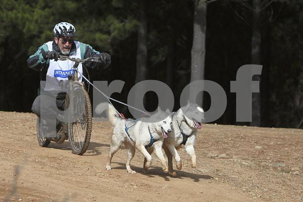 Kowen 2010 - Sunday 3/4 Dogs
