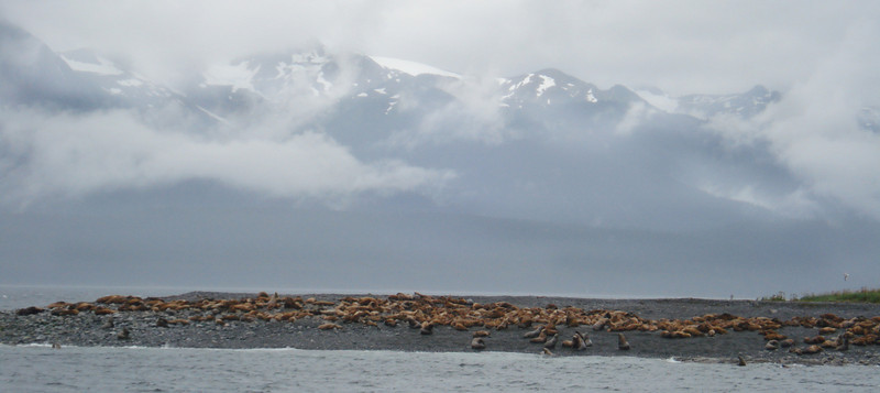 Sea Lions and Mountains 2.jpg