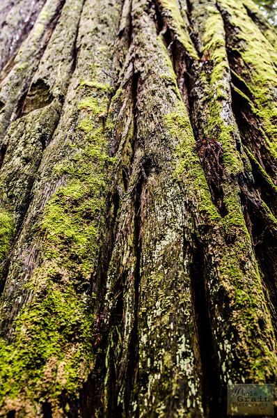 20141015_Redwoods_0065.jpg
