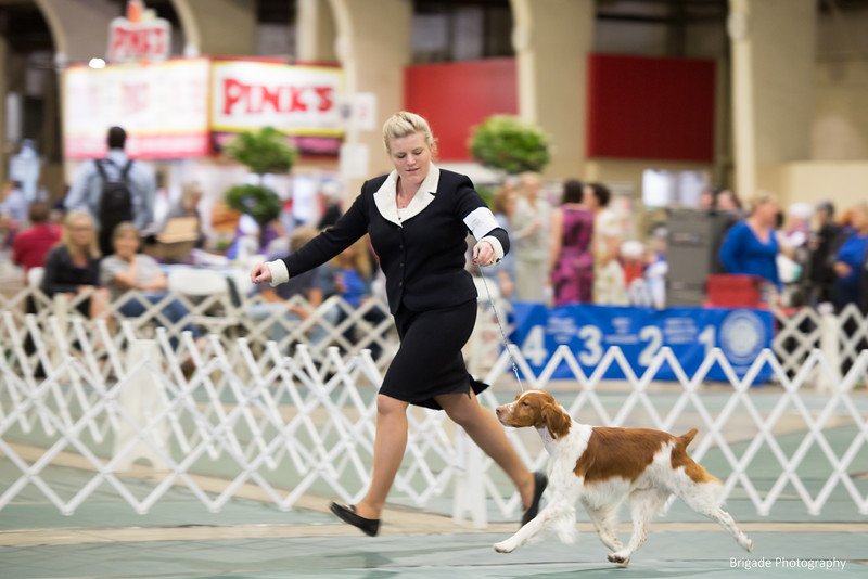 83	GCH GERSTDALE'S CAPITAL GAINS BN RASH CGCA TKN , SR86618503 12/5/2014. Breeder: Debbie Inferrera. By CH Copley's Gunnery Sergeant JH -- GCH Gerstdale's Take The Money N'run Jh. Harriet Tucker and Debbie Inferrera . Dog.