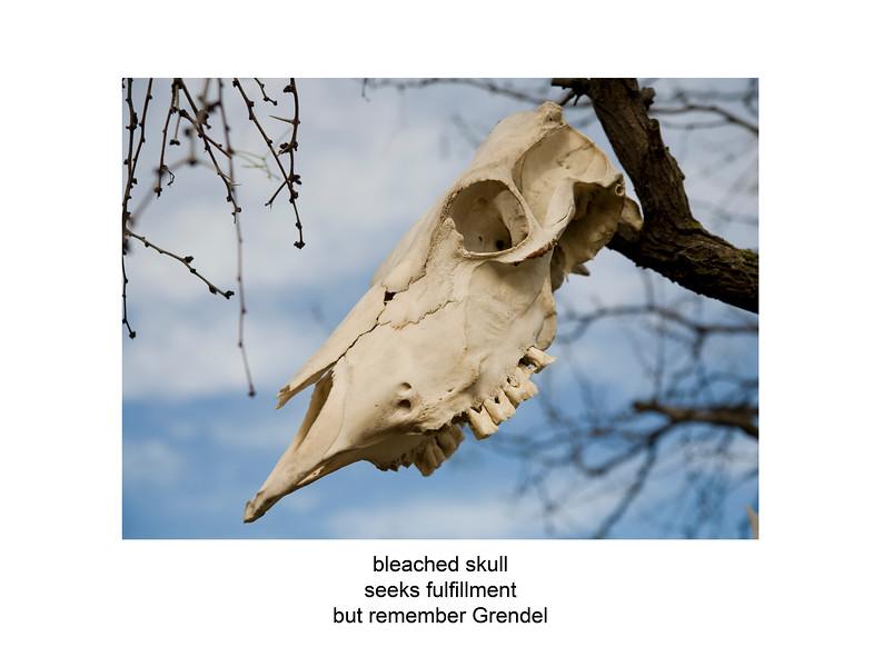 2007-12-03 skull in tree ozona 3141 poem.jpg