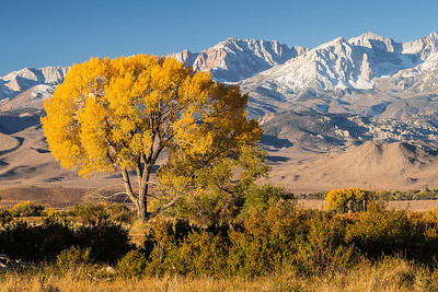 Eastern Sierra-2013
