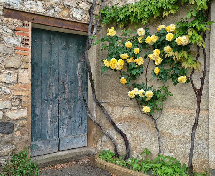 Yellow Roses and Blue Door