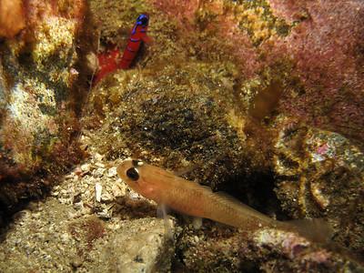 Catalina Island-Eagle, Isthmus Reefs 04-03-10