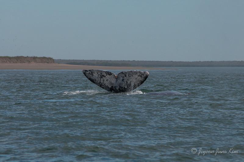 Mexico-Loreto-Whale-2254.jpg