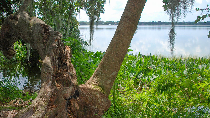 Oak and palm lean over lake at The Point