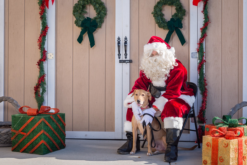 Pet Pictures With Santa-52.jpg