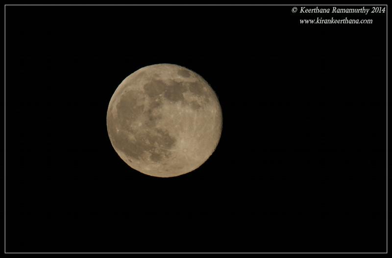 Super Moon, Scripps Ranch, San Diego County, California, July 2014