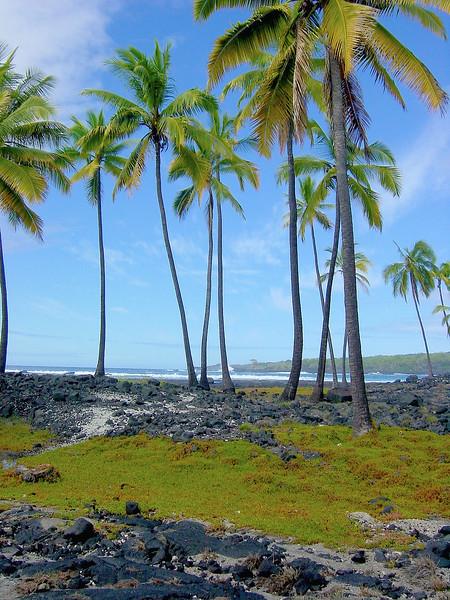 Coconut Trees on Beach 2