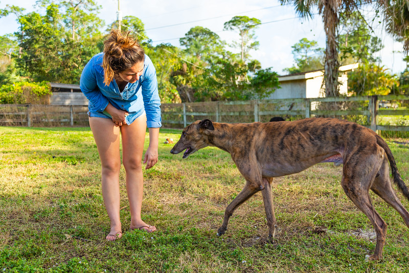 Alexandra Stratemann interacts with one of the rescued greyhounds from the Canidrome in Macau, China on Monday, December 31, 2019. Elite Greyhound Adoptions in Loxahatchee Groves has been rescuing greyhounds from the infamous Canidrome, in Macau, China.  The Canidrome closed in July 2018 and over 600 dogs are being shipped to rescues in Eurpoe and America. The dogs are crated in Macau, transported to the airport in Hong Kong, flown to Frankfurt, Germany, transferred to another plane and then flown to Miami International Airport, where they pass through customs and eventually get picked up by Sonia Stratemann of Elite Greyhound Adoptions. [JOSEPH FORZANO/palmbeachpost.com]