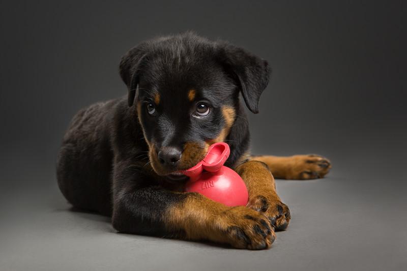 Capture those puppy eyes
