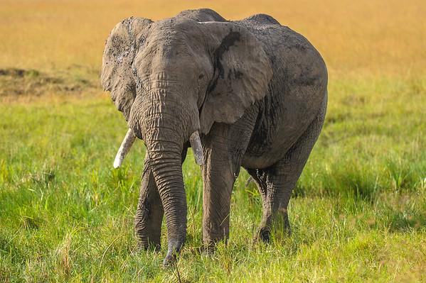 Safari in Maasai Mara National Park