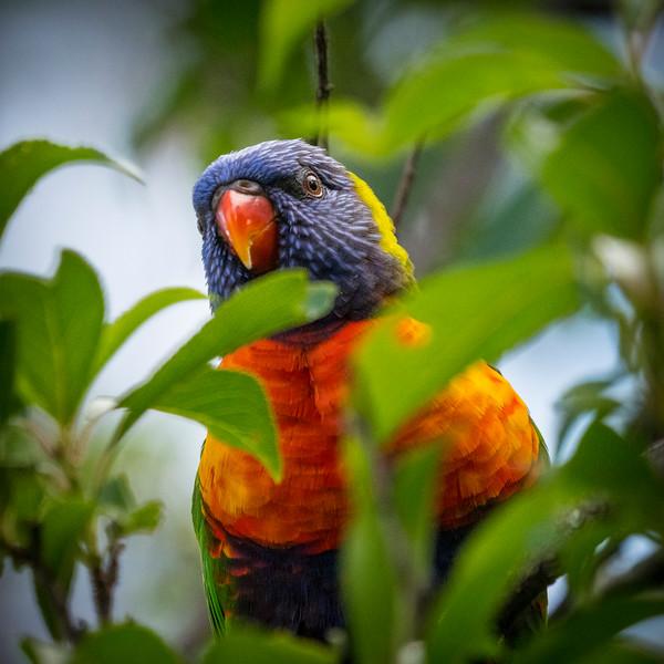 121818  birds  _16.JPG