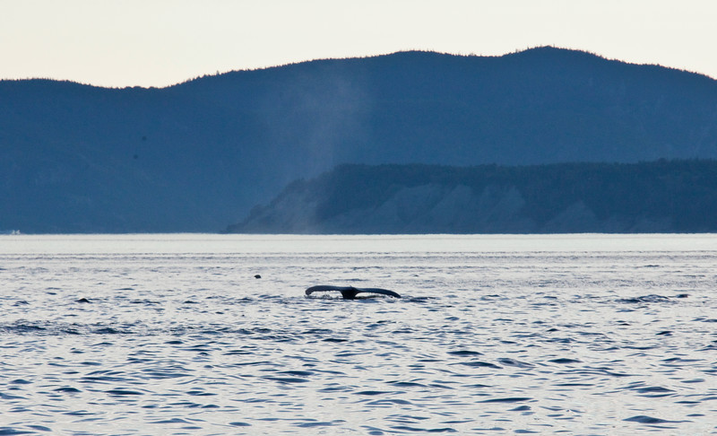2011 quebec whale watching (65 of 80).jpg