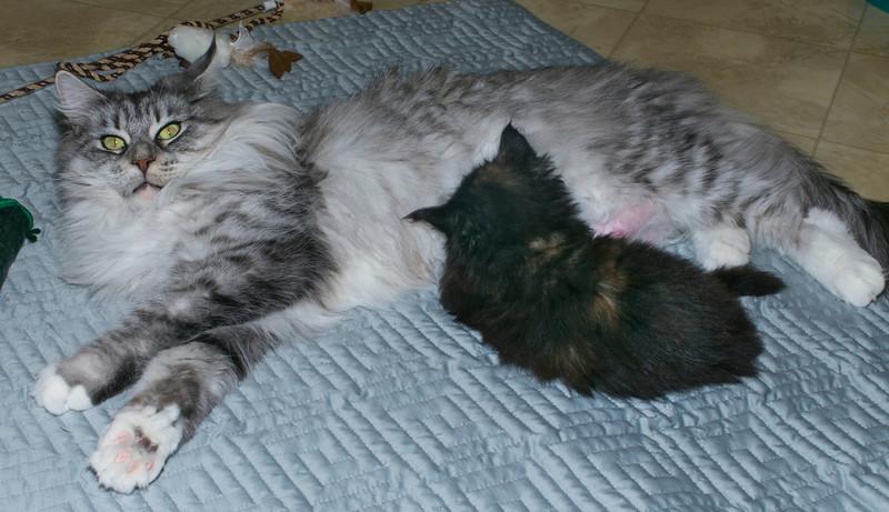 Kittens314.jpg