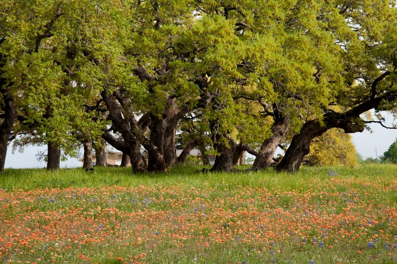 2015_4_3 Texas Wildflowers-8063.jpg