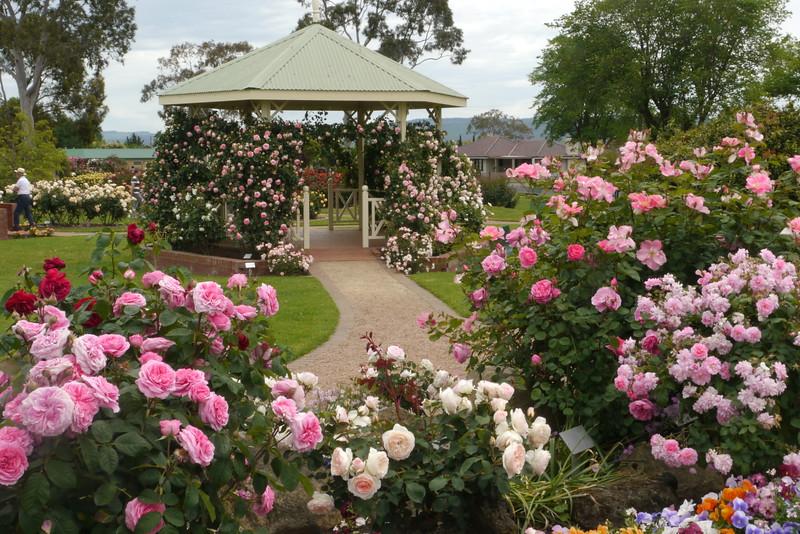 20141104_1306_9327 Morwell Rose Garden