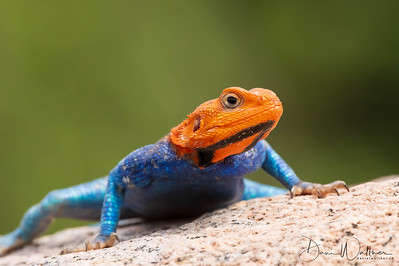 Here the Reptiles Images