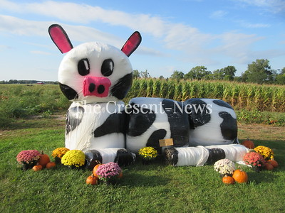 09-24-19 NEWS hay cow