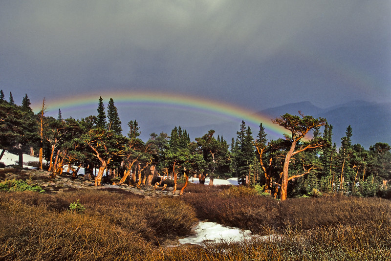 Early spring showers produce a vivid rainbow above the ancient Bristle Cone Pine forest on Mount Evans, near Idaho Springs, Colorado.