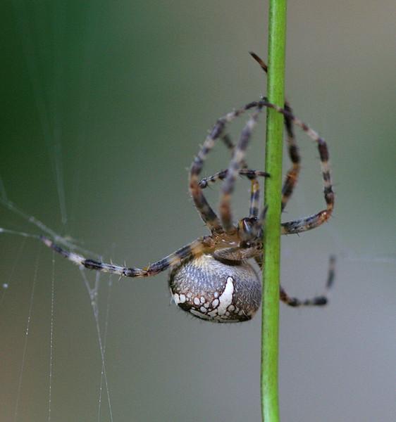 5106 Spider & Vine.jpg