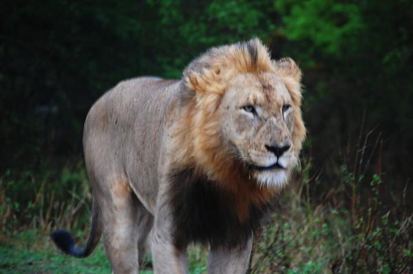 Kruger - Day 20 - Nov 1