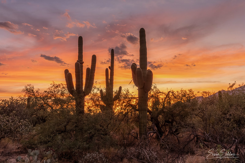 Sabino Sunset 8-17-2019a-.jpg