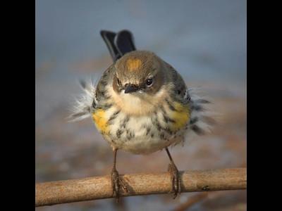 Paul Simmons - Bird Portraits